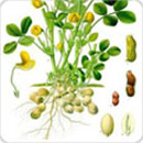 Technologies Improved Production Technology For Oilseeds