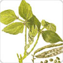 Technologies Improved Production Technology For Pulses